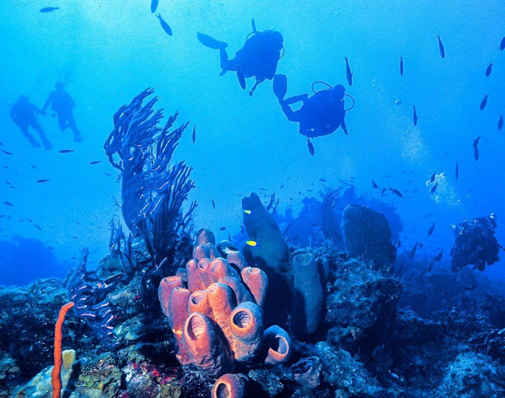Little Cayman Make new dive buddies!