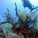 Dive Haven Diver